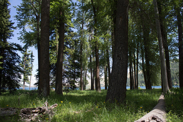 What Can I Expect from Wallowa Fiddle Tunes Camp?